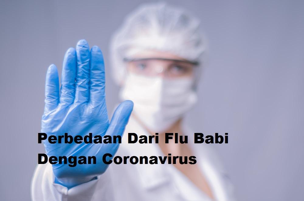 Perbedaan Dari Flu Babi Dengan Coronavirus